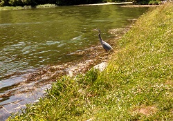 Stories of an Everyday Runner - Heron Wildlife