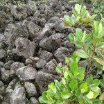 Large volcanic rocks
